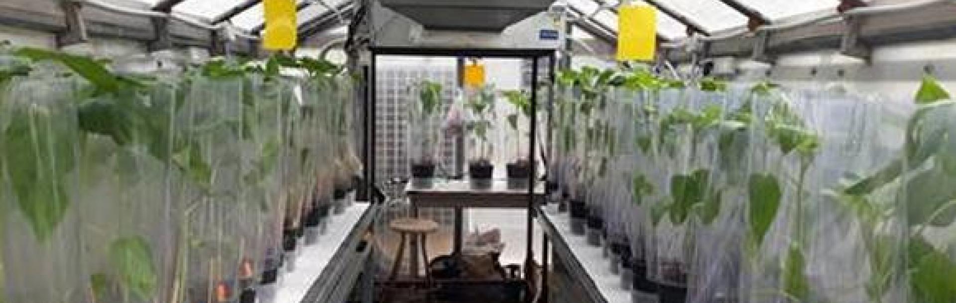 צמחים שמנקים את הקרקע