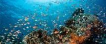 מיליון מיני צמחים ובעלי חיים נמצאים בסכנת הכחדה, בהם גם המין האנושי