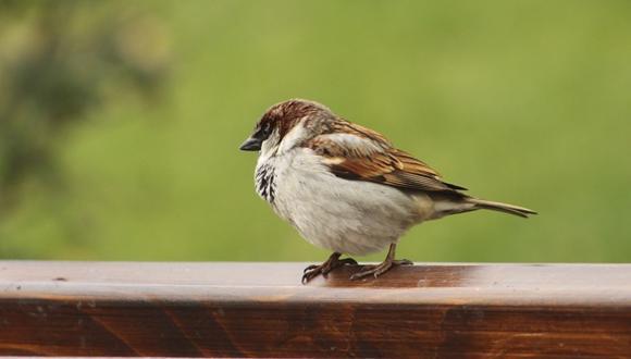 מיזם 'ספירת ציפורי בר בחצר בשיתוף ציבור' אמצעי ממשקי וחינוכי לשמירת מגוון ביולוגי בעיר