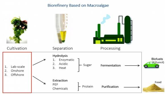 פיתוח סימביוזה בין אצות וחיידקים ליצירת אנרגיה ומזון עבור התעשייה