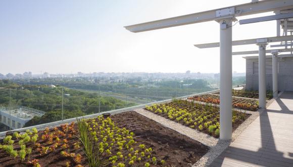 מבט על העיר מהגג הירוק בבניין פורטר. תמונה: שי אפשטיין