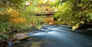 """השבת מים לטבע """"מעיינות הדופן"""" מורדות הגולן: ממשק המים ומשמעותו האקולוגית"""