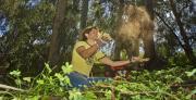 שימוש בפולמרים סינטטיים להקטנת סחף קרקע לאחר שריפות יער