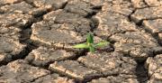 ספקטרוסקופיה של החזרה ככלי מהיר למיפוי כמותי של מזהמים פחמימניים בקרקע