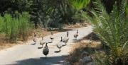 פיתוח הנחיות תכנון נוף להעשרת מגוון מיני צמחית בר וחיות בר בשטחים פתוחים עירוניים בישראל
