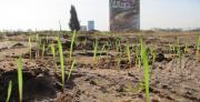תכנון שיקומו של שטח חקלאי בשולי מרחב אורבאני ליצירת פארק טבע קהילתי