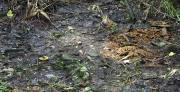 ספקטרוסקופיה של קרקעות לאחר שריפה: בחינת השינויים בתכונות הספקטרליות של הקרקע והשפעתם הסביבתית