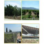 שינויים בשימושי קרקע בישובים כפריים באזור השרון בשנים 1965-2008