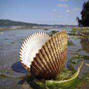 השפעות אירועי עקות יובש על החברה האקולוגית בטבלאות הגידוד לנוכח שינוי אקלים