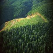 השפעת דילול יער אורן על תנאי האקלים, מיקרו-אקלים וחברת הנמלים